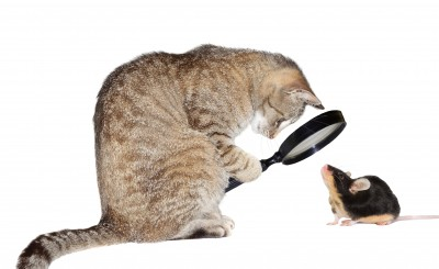 How Do Cats Eat Mice