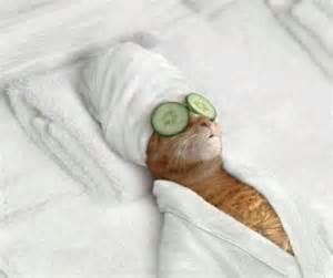 Detox cat